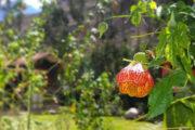 flora y fauna camino inca