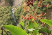 route inca trail